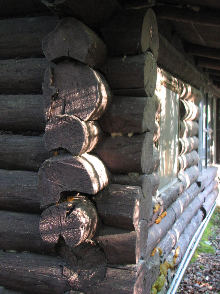 Old logs before rehab